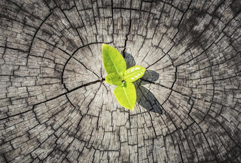resiliencia familiar resiliencia psicologica definicion de resiliencia