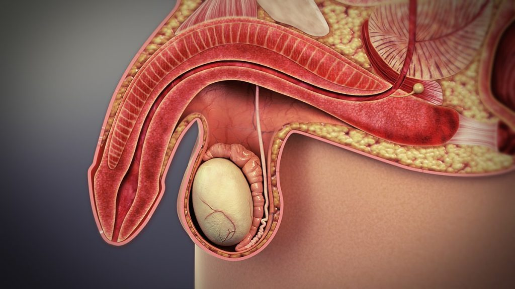 disfuncion erectil causas impotencia